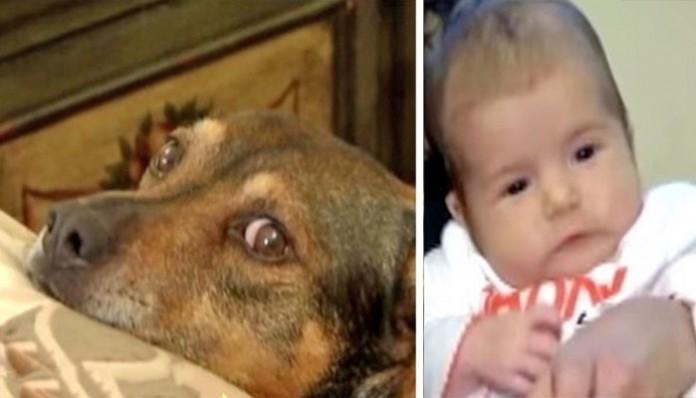 σκύλοι μωρό
