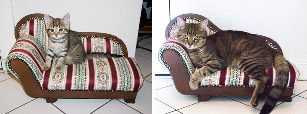 γάτες γατάκια