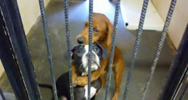 Σκύλος καταφύγιο ζώων