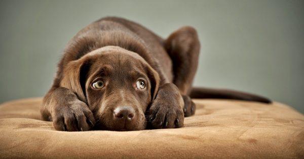 Η τραυματική εμπειρία του σκύλου που μένει πολλές ώρες μόνος