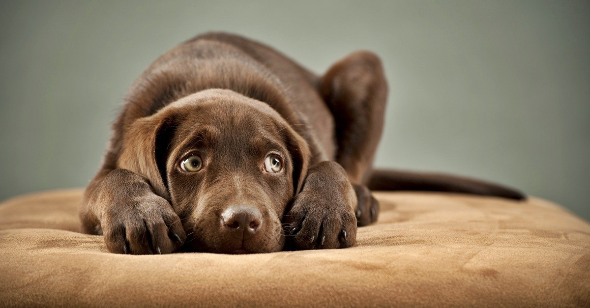 συναισθήματα Σκύλος