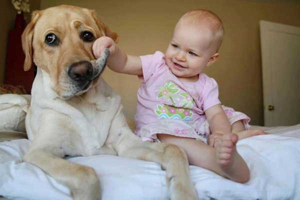 babydogy3