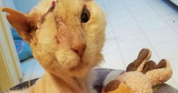 Διεστραμμένος ρίχνει οξύ στο πρόσωπο γάτας, η γάτα όμως δεν έχασε ποτέ την πίστη της στους ανθρώπους