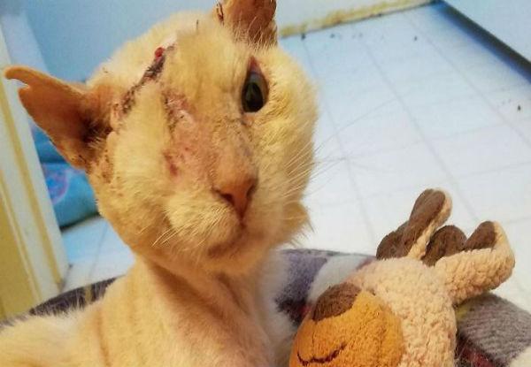 κακοποίηση ζώων Γάτα