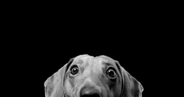 Νέο βίντεο ευαισθητοποίησης της Ζ.Ε.Η. για την κακοποίηση των ζώων