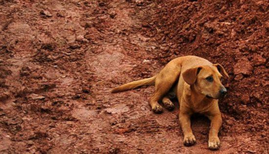 Η συγκλονιστική αφοσίωση ενός σκύλου (εικόνα)