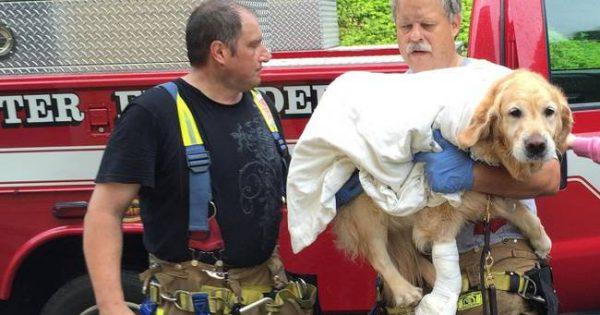 Σκύλος-οδηγός έπεσε μπροστά σε λεωφορείο για να σώσει τη συνοδό του