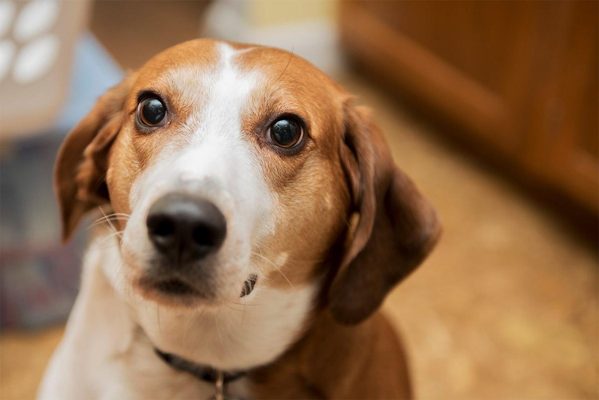 Σκύλος γλώσσα σώματος