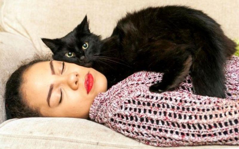 επιληψία επιληπτικές κρίσεις γάτος