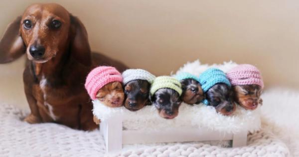 Πανέμορφη σκυλίτσα ποζάρει με χάρη πλάι στα νεογέννητα κουταβάκια της. Δείτε τις αξιολάτρευτες φωτογραφίες!