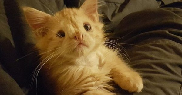 Κανείς δεν ήθελε αυτό το γατάκι λόγω της εμφάνισής του. Μόλις όμως του έδειξαν λίγη αγάπη, τα πάντα άλλαξαν!