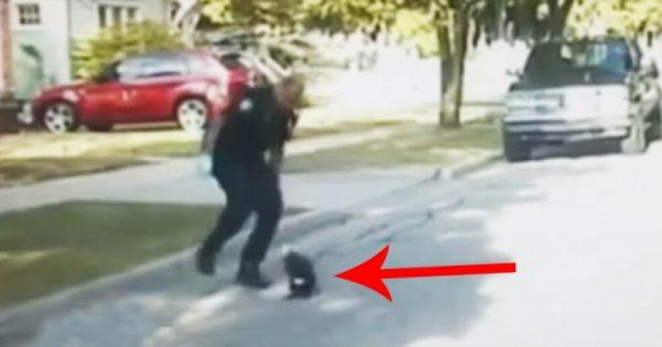 Μόλις ο αστυνομικός είδε αυτό στη μέση του δρόμου κατέβηκε αμέσως από το περιπολικό. Η συνέχεια; Θα σας κόψει την ανάσα!
