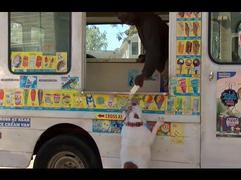 Σκύλος παγωτό παγωτατζίδικο