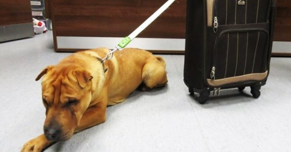 Τον βρήκαν μόνο και τρομαγμένο δίπλα σε μια βαλίτσα. Όταν την άνοιξαν, δεν μπορούσαν να το πιστέψουν!