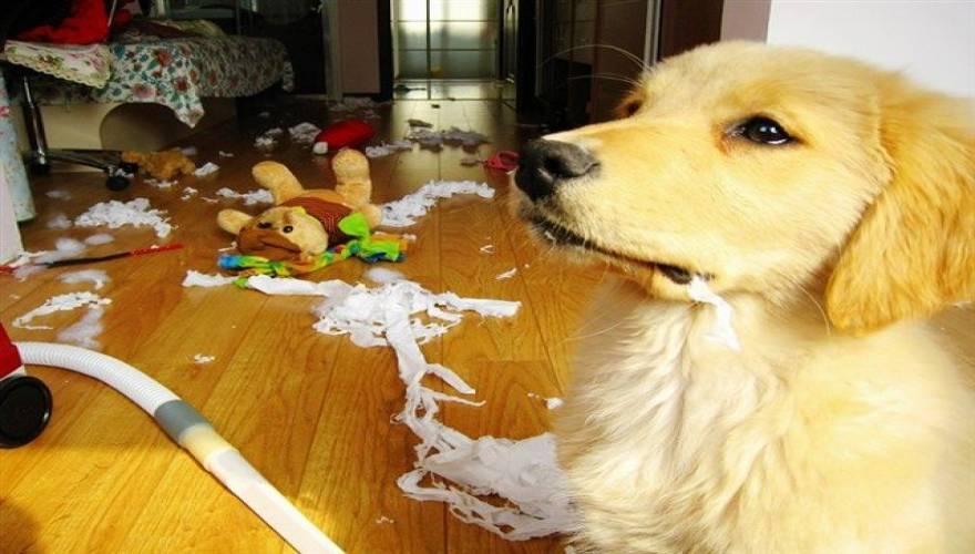 σπίτι Σκύλος