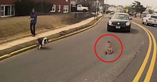 Πέντε περιπτώσεις όπου ζώα έσωσαν ανθρώπους από το θάνατο (βίντεο)
