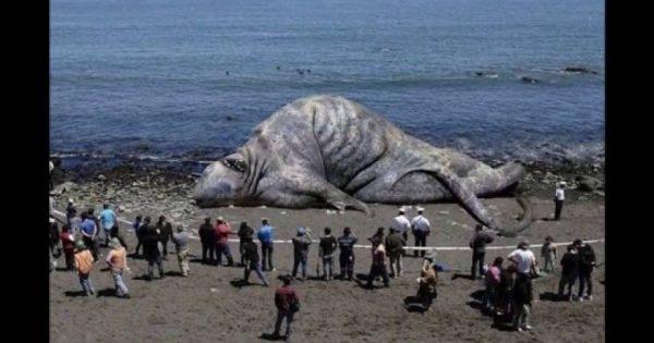 Δείτε τα 10 πιο παράξενα θαλάσσια πλάσματα που έχουν ανακαλυφθεί (βίντεο)