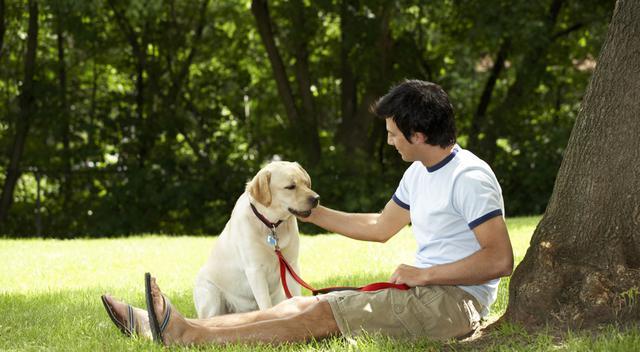 υιοθεσία σκύλου