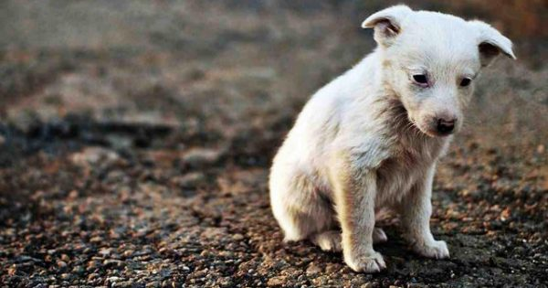 Συγκλονιστικό βίντεο! Δείτε πως αντιδρά αυτό το σκυλάκι που δέχεται χάδι για πρώτη φορά!