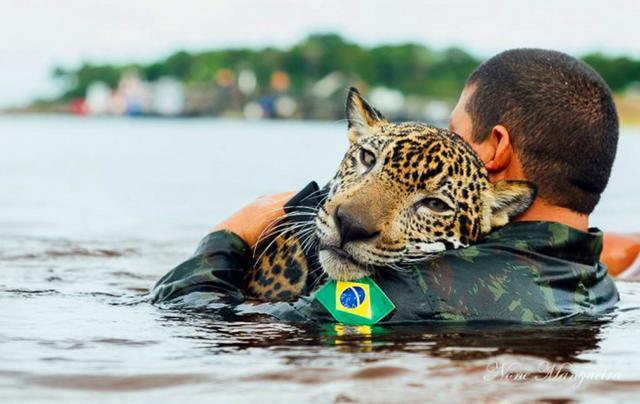 φωτογραφία jaguar