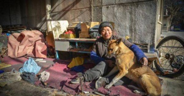 Σκύλος-ήρωας σπρώχνει κάθε μέρα το καροτσάκι του ανάπηρου κηδεμόνα του και τον πάει στην δουλειά