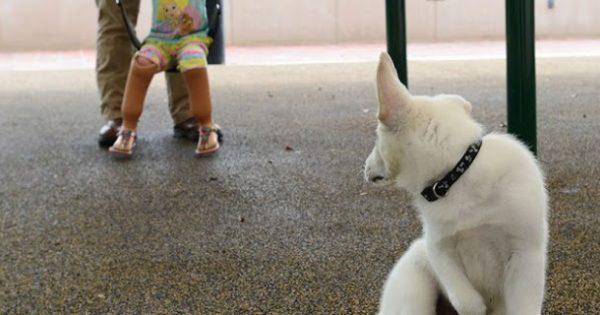Πραγματική και συγκλονιστική ιστορία: Ένα ανάπηρο παιδί και ένα κουτσό σκυλάκι, «χαστουκίζουν» την κοινωνία