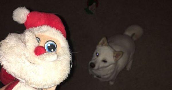 Σκυλάκι κολλημένο με κουκλάκι Άγιο Βασίλη φωτογραφίζεται επιτέλους με τον «αληθινό»!