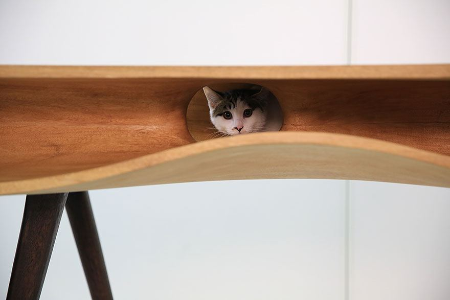 τραπέζι γάτες