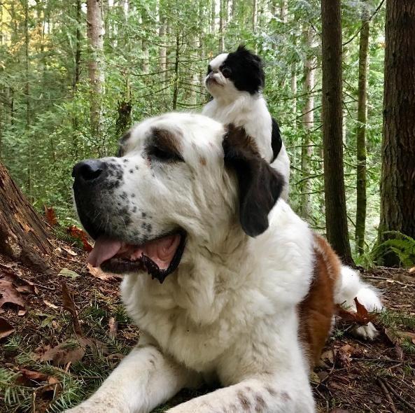 Σκύλος κουτάβι