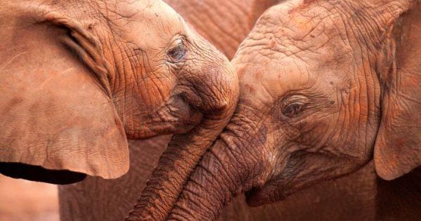 Καμπανάκι κινδύνου από το WWF για την εξαφάνιση των ζώων