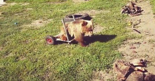 Γράμμα στον Άγιο Βασίλη από ανάπηρο αρκουδάκι του Αρκτούρου