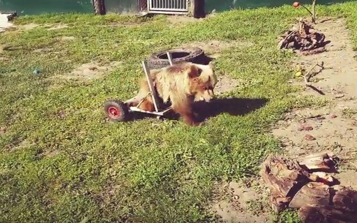 Αρκτούρος αρκουδάκι