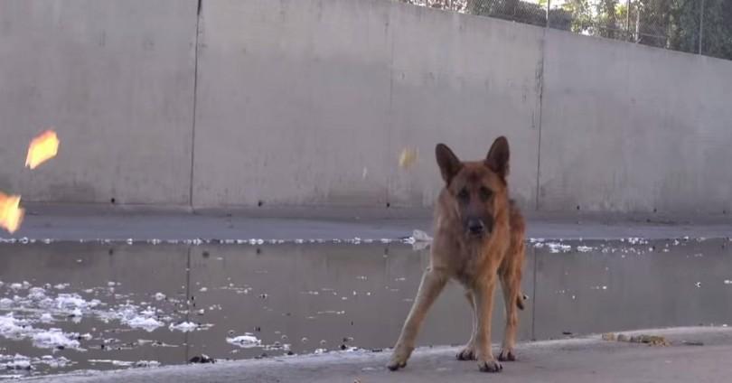 Σκύλος ποτάμι διάσωση