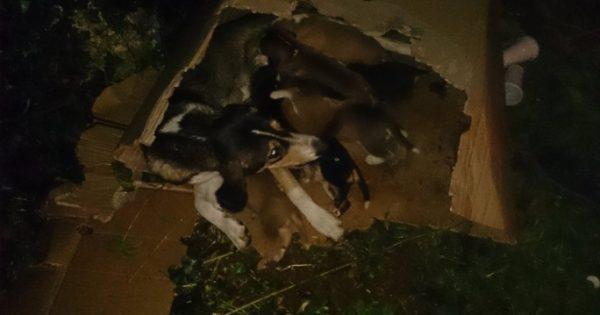 Σκυλίτσα προσπαθούσε να βγάλει από τον κάδο τα κουτάβια της που κάποιος πέταξε ζωντανά στα σκουπίδια