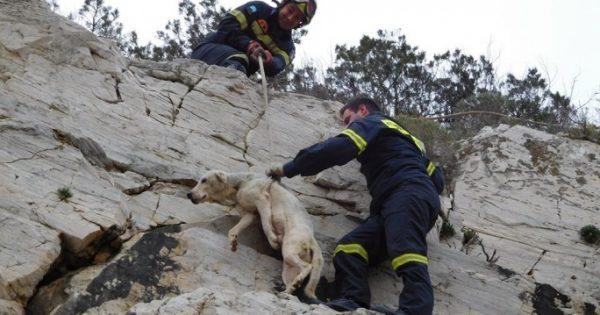 Πυροσβέστες έσωσαν τον σκύλο που είχε εγκλωβιστεί σε απότομη βραχώδη πλαγιά στη Διψέλιζα Κερατέας Αττικής