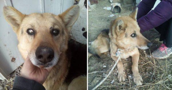 Λήμνος: Έσωσαν τον τυφλό και ηλικιωμένο σκύλο που κάποιος έδεσε σε χωράφι για να πεθάνει αβοήθητος