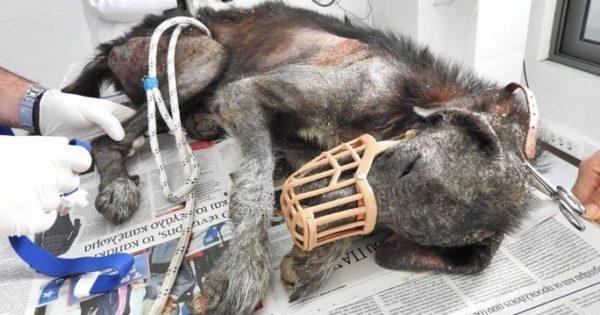 Βρήκαν την άρρωστη σκυλίτσα να περιφέρεται σαν ζωντανό πτώμα στο Κορωπί Αττικής