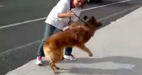 Το σκυλί ξάπλωνε φοβισμένο στην άκρη του δρόμου. Τότε αυτή η γυναίκα το άρπαξε από την αλυσίδα και έκανε το αδιανόητο!