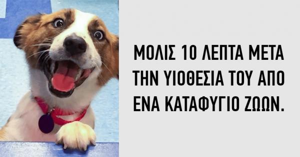 15 φωτογραφίες ζώων πριν και μετά την υιοθεσία τους!