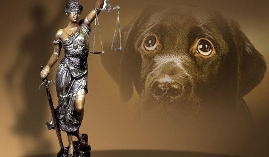 Πατέρας και γιος καταδικάστηκαν για βίαιη περισυλλογή τριών αδέσποτων σκύλων στο Ηράκλειο Κρήτης