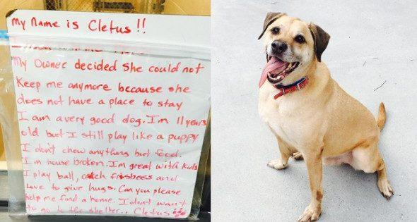 Το συγκινητικό μήνυμα άστεγης για να βρει ένα καλό σπίτι ο σκύλος της