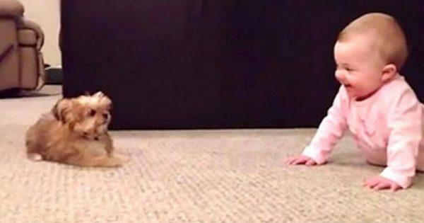 Πατέρας τραβάει την κόρη του ενώ εκείνη συζητάει με τον σκύλο. Το αποτέλεσμα θα σας κάνει να λιώσετε!