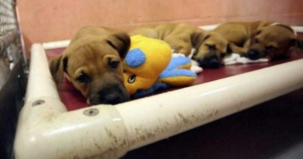 Άδειασαν τα κλουβιά! Καταφύγιο ζώων έδωσε για υιοθεσία 25 σκυλάκια και 23 γατάκια