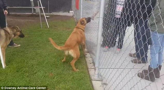 σκύλος. υιοθεσία αδέσποτων