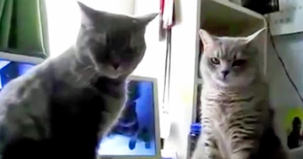 Οι Φίλες της δεν την πίστευαν όταν τις έλεγε τι κάνουν οι γάτες της τα βράδια. Μόλις όμως είδαν το βίντεο, έμειναν άφωνες!
