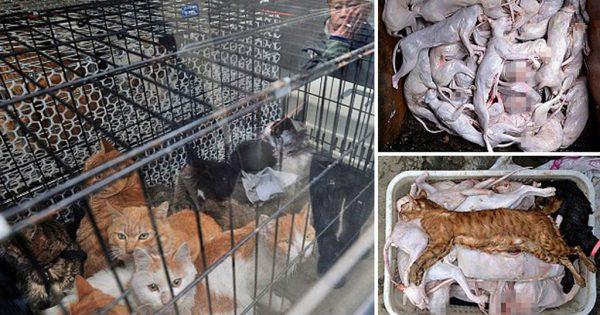 «Φιλόζωος» έσφαζε και πουλούσε γάτες σε εστιατόρια στην Κίνα