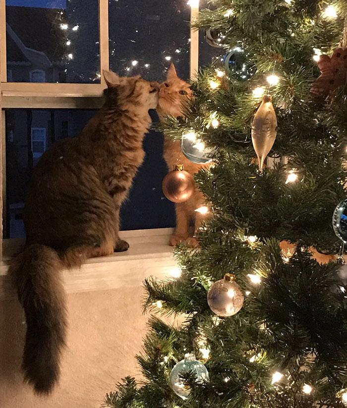 γάτες αγάπη
