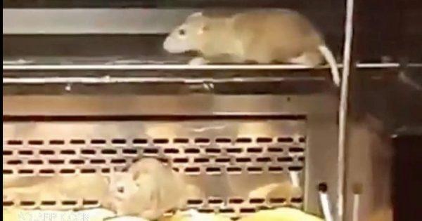Κάμερα καταγράφει εισβολή αρουραίων σε διάσημη αλυσίδα φούρνων – Δείτε το βίντεο