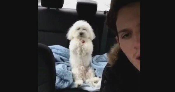 Τρελό γέλιο: Αυτό το σκυλάκι πιστεύει ότι είναι άνθρωπος –Δείτε τι κάνει (video)