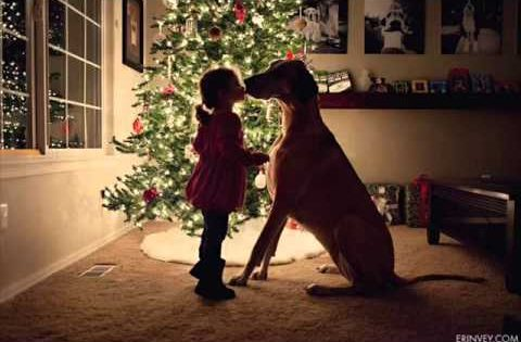 Χριστούγεννα και Σκυλιά